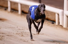 Barry's Tea and FBD Insurance withdraw sponsorship of greyhound races after 'recent revelations'