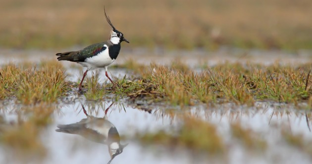 Quiz: Native Irish bird species are in decline - test your knowledge on them before they disappear