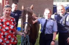 'Therapy pony' recovered safely by gardaí after being stolen in Co Tipperary last week