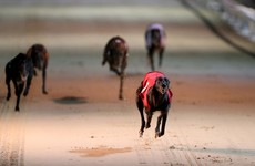Connolly's Red Mills withdraws greyhound sponsorship over 'shocking revelations' about industry