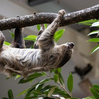 How to do Fota Wildlife Park like a pro: Picnic spots, parking perks and how to meet Matheo the sloth