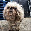 Dog dies after being 'eaten alive' by maggots in case of severe neglect in Dublin