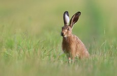 Two men convicted of illegally hunting hares in case brought by National Parks and Wildlife Service