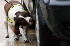 Revenue's new sniffer dog Ralph helps seize €319k of cannabis in Rosslare