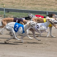 Longford greyhound track closes after 80 years citing rising insurance costs