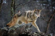 Trump administration rolls back on protections for endangered species