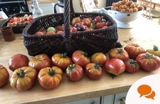 From the Garden: What to do when you have an abundance of vegetables