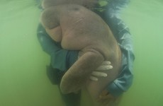 Beloved Thai dugong found dead with plastic in her stomach