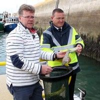 'It benefits ourselves and the environment': Seabin that collects plastic waste is launched in Howth Harbour