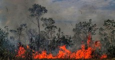 Tens of thousands of fires are burning in the Amazon - here's what you need to know