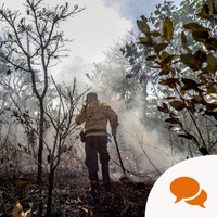Saoirse McHugh: How Ireland can help in fighting the Amazon rainforest fires