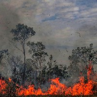 60-day ban on burning in Brazil following global outcry over Amazon fires