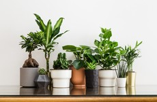 Branching out: 6 super-stylish alternatives to a standard plastic plant pot