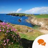The Irish For: The weeds and wildflowers that bother and delight the countryside