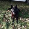 Arrest: Garda dog locates man in his 20s as gardaí probe Cork city burglaries