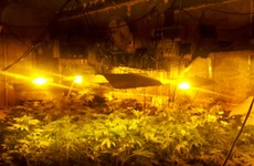 Gardaí seize €90k worth of cannabis from Limerick growhouse