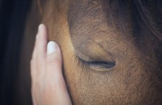 'It's a waste of animals' lives': A new film looks at why 2,000 horses are killed by Irish councils every year