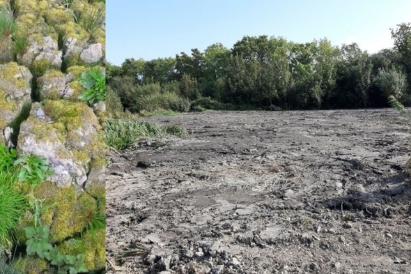 'A punch in the gut': Outrage as wetlands area in Tallaght is destroyed