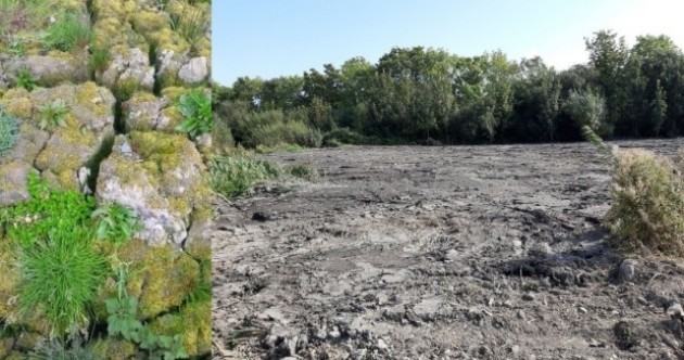 Council confirms it deposited silt on 'destroyed' Tallaght wetlands