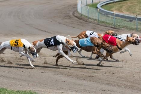 Greyhound racing.