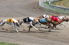Greyhound board in 'shock' over decision to not promote the sport to tourists