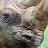 Irish man jailed in US for trafficking rhino horns