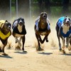 Dublin hotel cancels conference on greyhound welfare after staff receive threatening phone calls