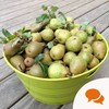 From the Garden: Harvesting, storing and pickling fresh pears this season