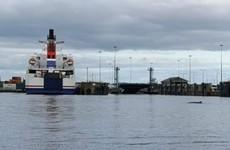 Whale spotted in River Liffey found dead near Dublin Port