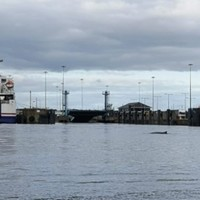 Whale spotted in River Liffey found dead near Dublin Port
