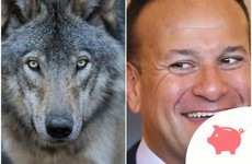 Taoiseach says he'd sooner bring back wolves to Ireland than let Sinn Féin into government