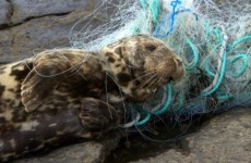 Why are seals being killed? Sanctuary notes 'swing in activity'
