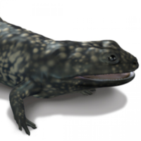 325-million-year-old amphibian fossil discovered in Co Clare
