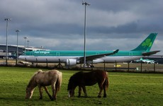 Flights, electricity, and Anglo-Irish travel: Things that will be fine in a no-deal Brexit
