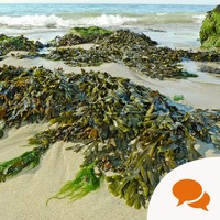 From the Garden: Using seaweed to compost at home before winter hibernation