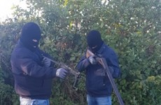 Longford feud violence flares again as slash hooks produced following graveyard gun video