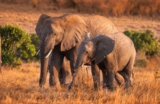 Dozens of elephants have died due to severe drought in Zimbabwe