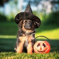 Are you a pet owner? Here's some advice on keeping them safe and content this Halloween