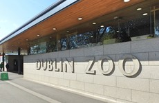 Pope visit and extreme weather send profits at Dublin Zoo company tumbling