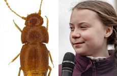 Newly discovered beetle named after climate activist Greta Thunberg