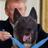 Donald Trump to bring 'beautiful dog, talented dog' from ISIS raid to the White House