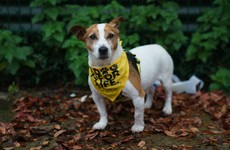 Almost 2,000 people have surrendered their dogs to Dogs Trust so far this year