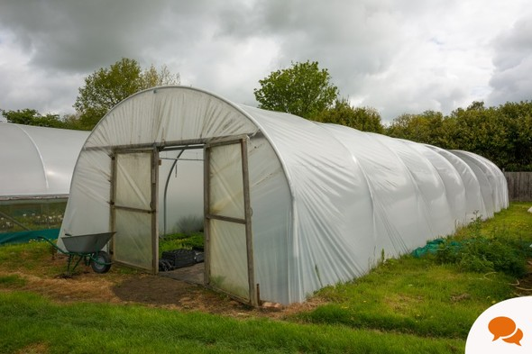 From the Garden: Making the most of polytunnel growing this winter