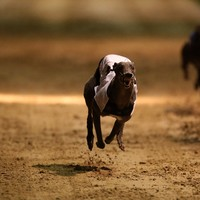 Irish Greyhound Board to spend estimated €350k on traceability database