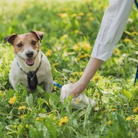 Poll: Should it be mandatory for dog owners to carry litter bags?