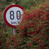 Not happy with a speed limit in your area? Plans underway to allow members of the public to appeal for changes