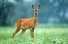 Deer found dead with 7kg of plastic bags, underwear and towels in stomach in Thailand