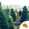 From the Garden: Buying a real Christmas tree supports local jobs and brings a certain magic to the home