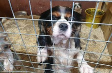 Police rescue 31 dogs and puppies in Co Tyrone