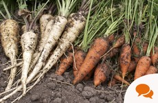 From the Garden: Eat your (locally grown) vegetables this Christmas